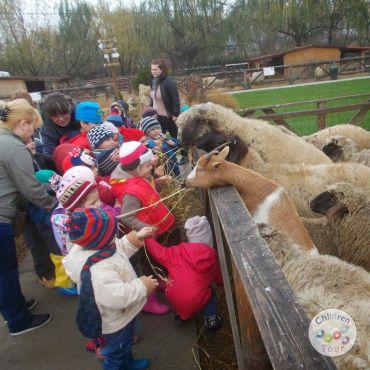 Mai multe despre Vizita la Ferma Animalelor